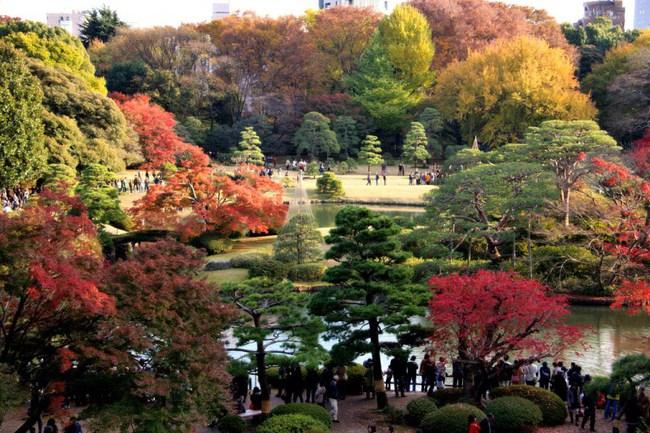 Ngắm nhìn Nhật Bản trầm mặc mà vẫn đẹp đến nao lòng mỗi độ thu sang - Ảnh 14.