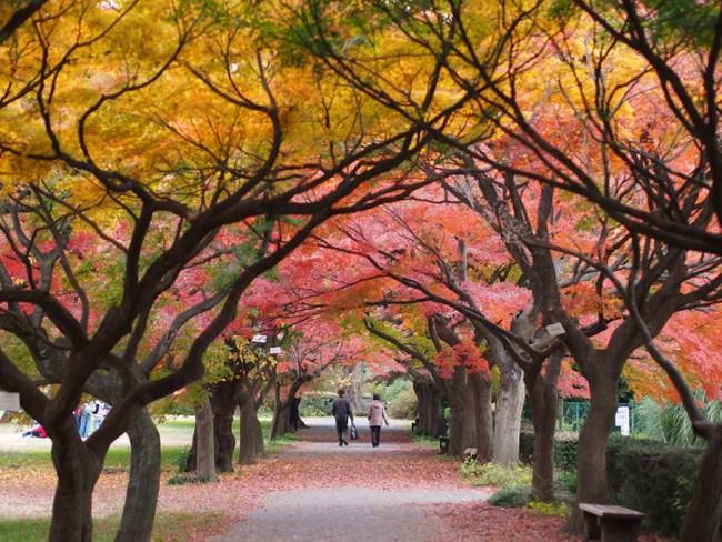 Ngắm nhìn Nhật Bản trầm mặc mà vẫn đẹp đến nao lòng mỗi độ thu sang - Ảnh 15.