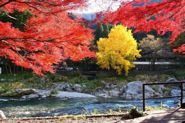 Ngắm nhìn Nhật Bản trầm mặc mà vẫn đẹp đến nao lòng mỗi độ thu sang - Ảnh 16.
