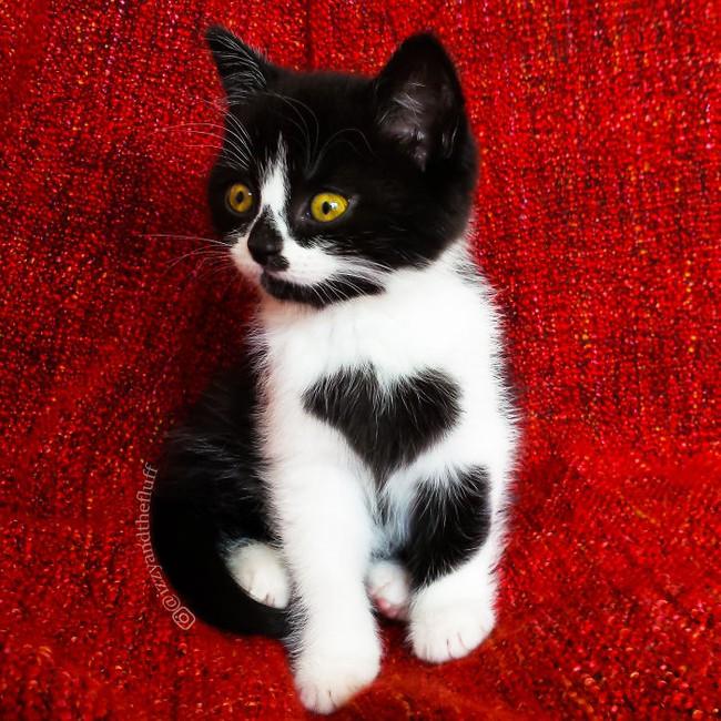Cô mèo có nhúm lông hình trái tim khiến ai cũng phải đổ gục - Ảnh 1.