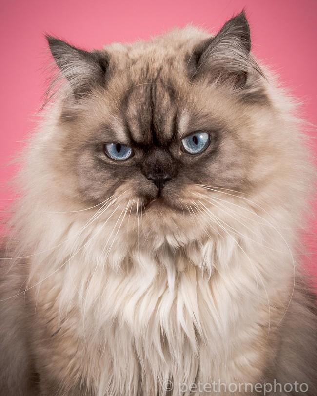 Chân dung 14 em mèo mập nhưng vẫn tấp nập người theo - Ảnh 4.