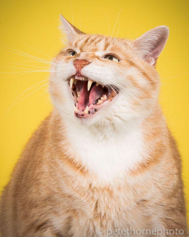 Chân dung 14 em mèo mập nhưng vẫn tấp nập người theo - Ảnh 5.