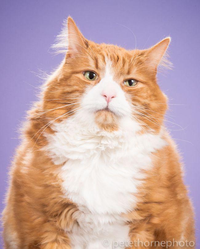 Chân dung 14 em mèo mập nhưng vẫn tấp nập người theo - Ảnh 8.