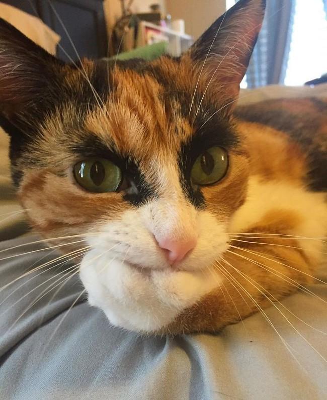 Gặp gỡ cô mèo có đôi lông mày như đang hờn cả Trái Đất - Ảnh 2.
