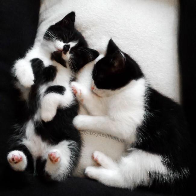 Cô mèo có nhúm lông hình trái tim khiến ai cũng phải đổ gục - Ảnh 3.