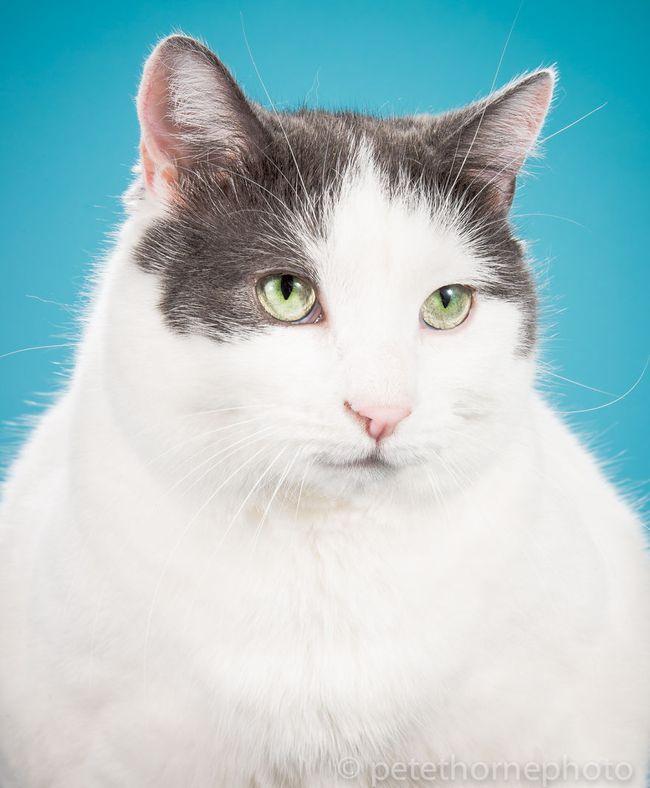 Chân dung 14 em mèo mập nhưng vẫn tấp nập người theo - Ảnh 9.