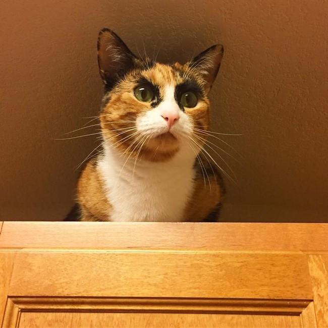 Gặp gỡ cô mèo có đôi lông mày như đang hờn cả Trái Đất - Ảnh 3.