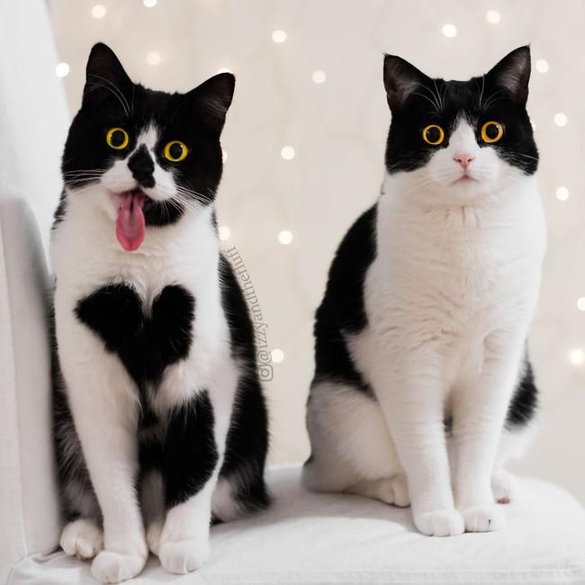 Cô mèo có nhúm lông hình trái tim khiến ai cũng phải đổ gục - Ảnh 7.