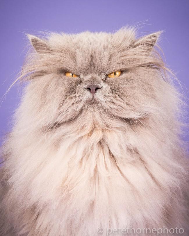 Chân dung 14 em mèo mập nhưng vẫn tấp nập người theo - Ảnh 10.