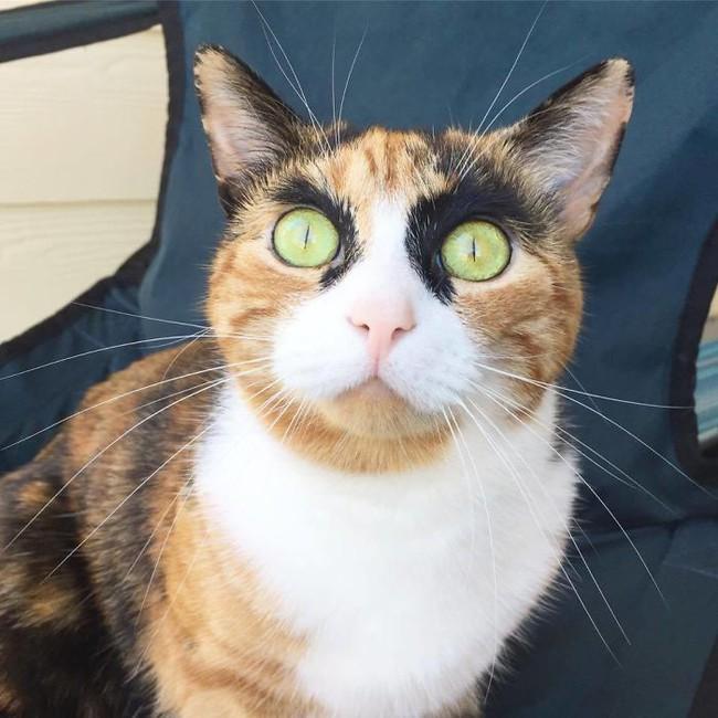 Gặp gỡ cô mèo có đôi lông mày như đang hờn cả Trái Đất - Ảnh 5.