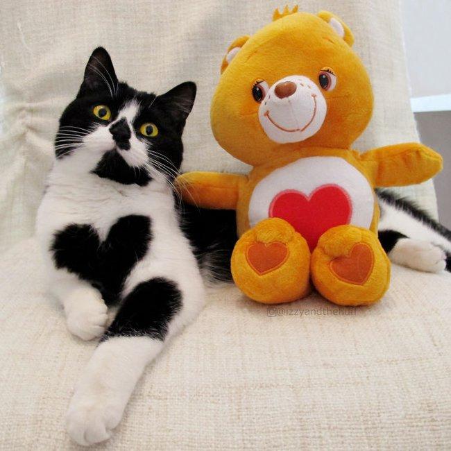 Cô mèo có nhúm lông hình trái tim khiến ai cũng phải đổ gục - Ảnh 11.