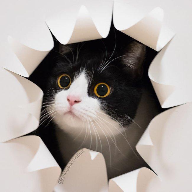 Cô mèo có nhúm lông hình trái tim khiến ai cũng phải đổ gục - Ảnh 13.