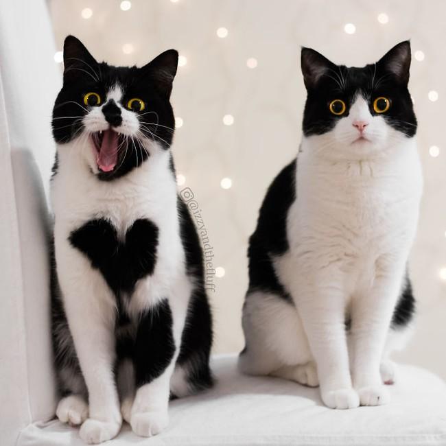 Cô mèo có nhúm lông hình trái tim khiến ai cũng phải đổ gục - Ảnh 15.