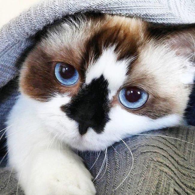 Chú mèo mũi đen thích cosplay đốn tim gần nửa triệu người trên Instagram - Ảnh 3.