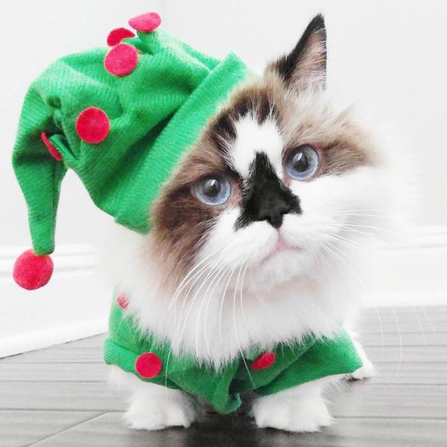 Chú mèo mũi đen thích cosplay đốn tim gần nửa triệu người trên Instagram - Ảnh 9.