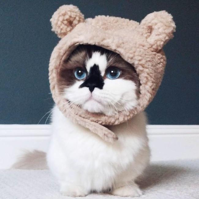Chú mèo mũi đen thích cosplay đốn tim gần nửa triệu người trên Instagram - Ảnh 13.