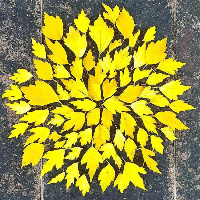 Tuyển tập những bức tranh tuyệt đẹp được vẽ nên từ lá vàng rơi và chổi - Ảnh 15.