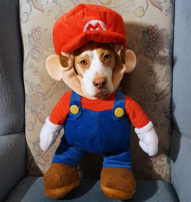 Đến fashionista cũng phải ngả mũ vì style thời trang của chú chó này - Ảnh 1.