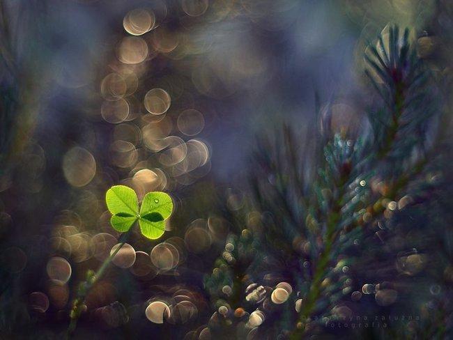 Bộ ảnh đẹp lung linh về ốc sên quấn quít bên hoa trong sương sớm - Ảnh 1.