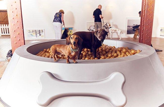 Ghé thăm triển lãm nghệ thuật dành cho chó đầu tiên trên thế giới - Ảnh 1.