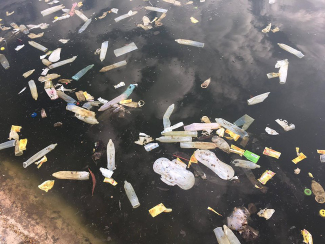 Những chiếc bao cao su nổi lên đầy mặt hồ Linh Đàm. Thậm chí có cả đồ tế nhị như băng vệ sinh. Ảnh: Benjamin James Park