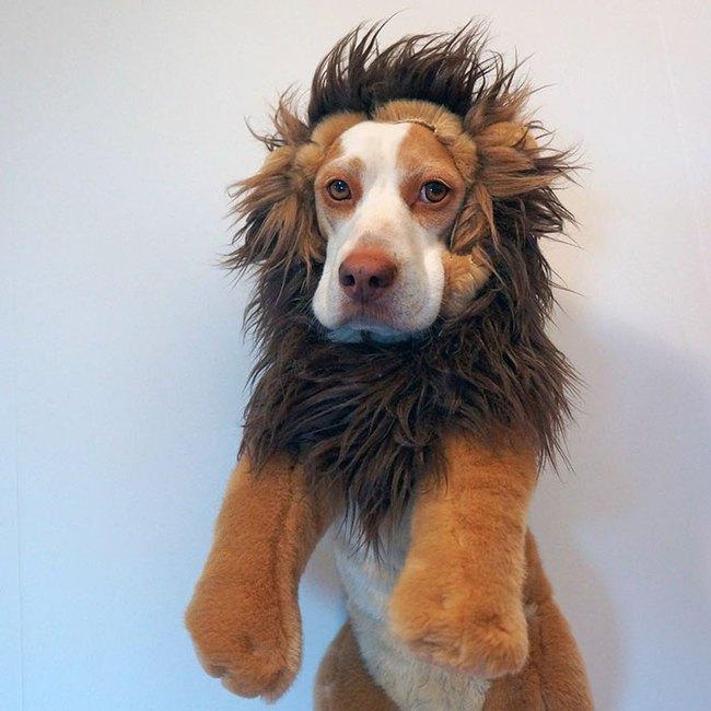 Đến fashionista cũng phải ngả mũ vì style thời trang của chú chó này - Ảnh 10.