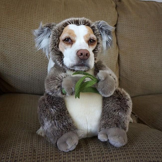 Đến fashionista cũng phải ngả mũ vì style thời trang của chú chó này - Ảnh 11.