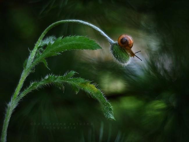 Bộ ảnh đẹp lung linh về ốc sên quấn quít bên hoa trong sương sớm - Ảnh 11.