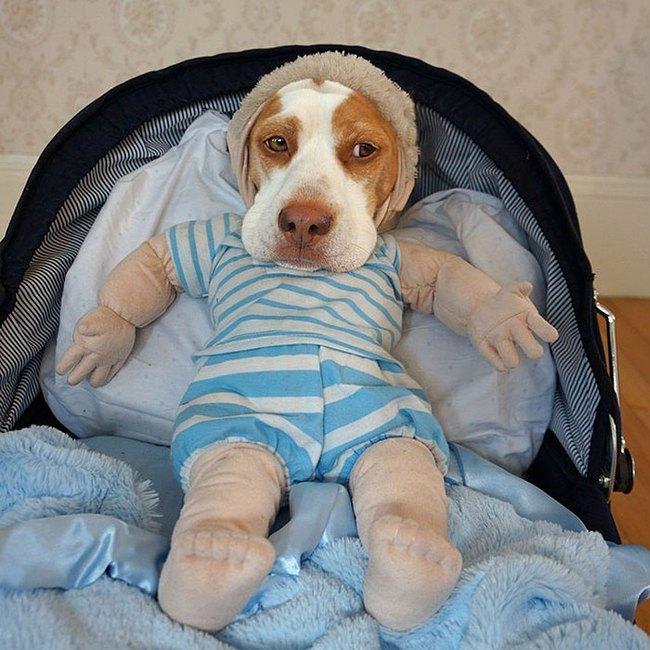Đến fashionista cũng phải ngả mũ vì style thời trang của chú chó này - Ảnh 12.