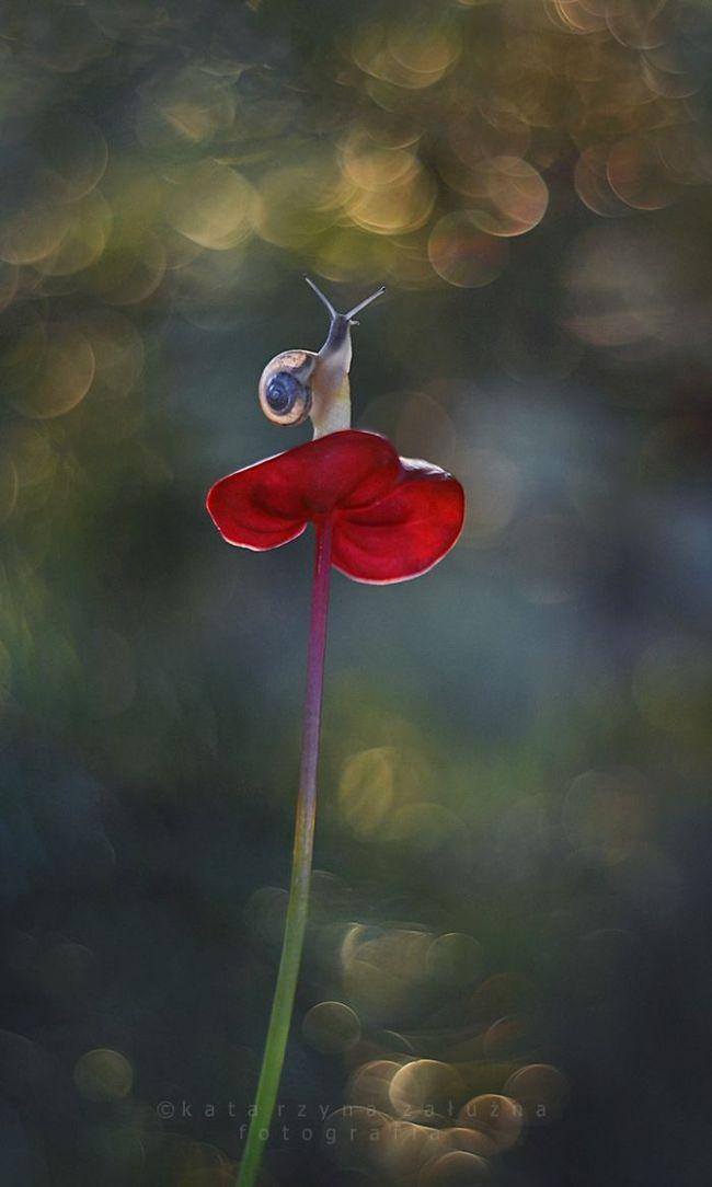 Bộ ảnh đẹp lung linh về ốc sên quấn quít bên hoa trong sương sớm - Ảnh 12.
