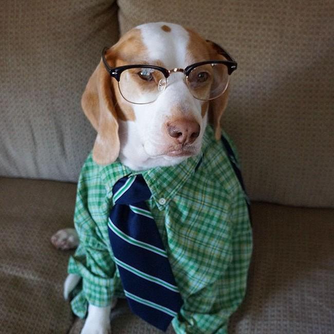 Đến fashionista cũng phải ngả mũ vì style thời trang của chú chó này - Ảnh 13.