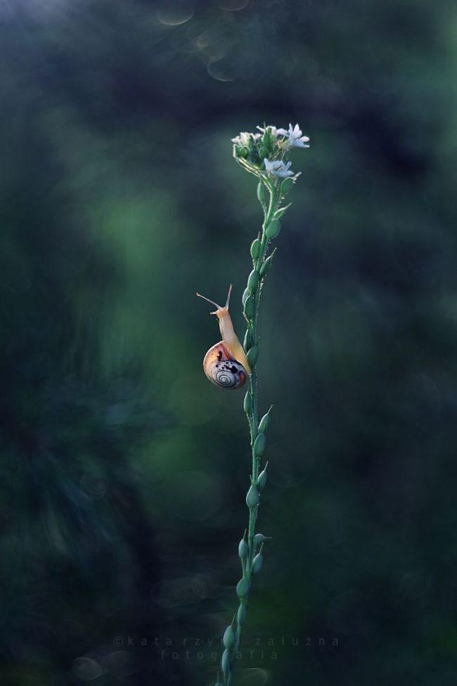 Bộ ảnh đẹp lung linh về ốc sên quấn quít bên hoa trong sương sớm - Ảnh 13.
