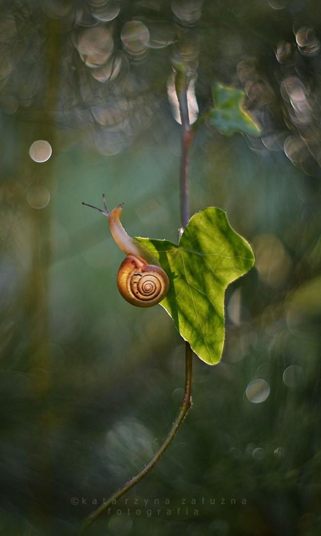 Bộ ảnh đẹp lung linh về ốc sên quấn quít bên hoa trong sương sớm - Ảnh 14.
