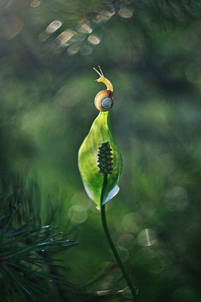 Bộ ảnh đẹp lung linh về ốc sên quấn quít bên hoa trong sương sớm - Ảnh 15.