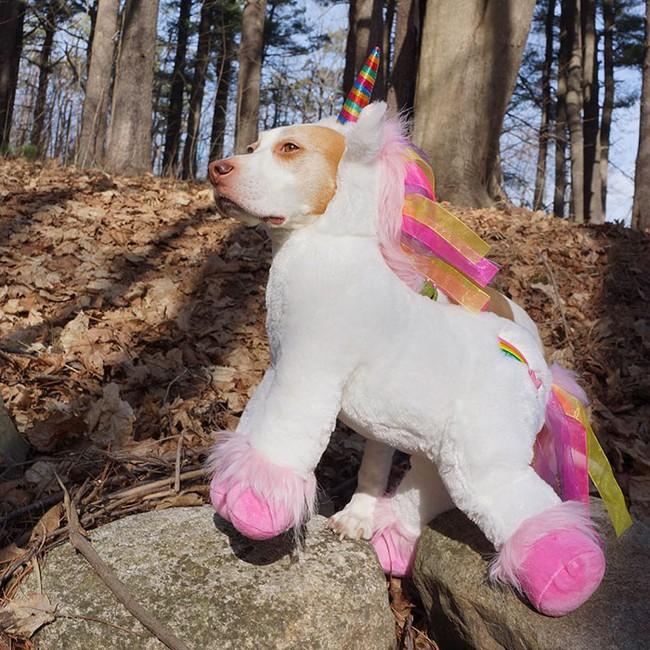 Đến fashionista cũng phải ngả mũ vì style thời trang của chú chó này - Ảnh 2.