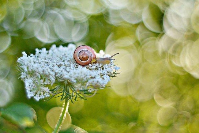 Bộ ảnh đẹp lung linh về ốc sên quấn quít bên hoa trong sương sớm - Ảnh 2.