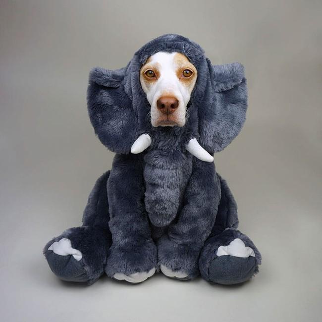 Đến fashionista cũng phải ngả mũ vì style thời trang của chú chó này - Ảnh 3.