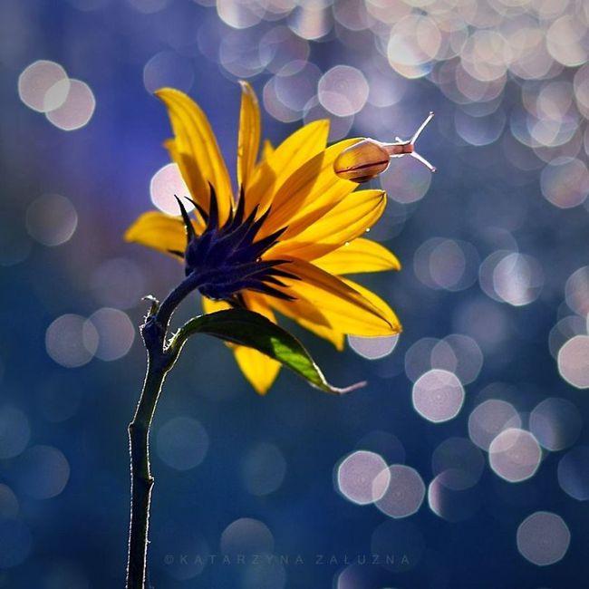 Bộ ảnh đẹp lung linh về ốc sên quấn quít bên hoa trong sương sớm - Ảnh 3.