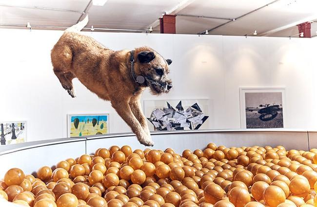 Ghé thăm triển lãm nghệ thuật dành cho chó đầu tiên trên thế giới - Ảnh 2.