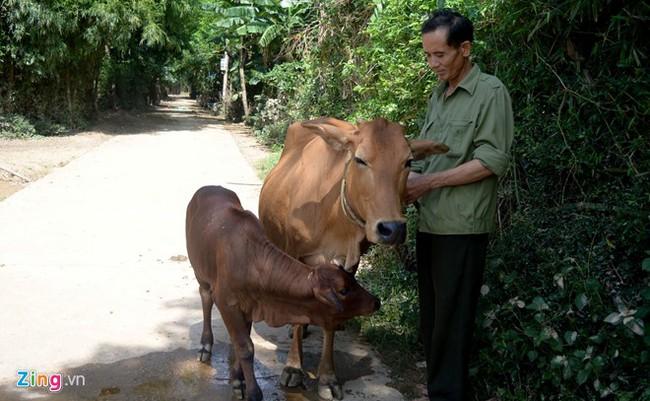 Tác giả bức ảnh con bò chìm trong nước lũ lên tiếng - ảnh 4