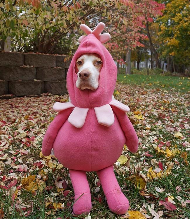 Đến fashionista cũng phải ngả mũ vì style thời trang của chú chó này - Ảnh 4.