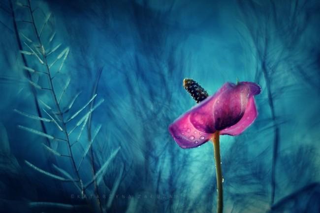 Bộ ảnh đẹp lung linh về ốc sên quấn quít bên hoa trong sương sớm - Ảnh 4.