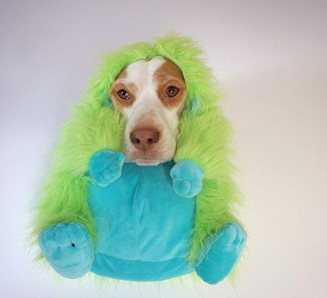 Đến fashionista cũng phải ngả mũ vì style thời trang của chú chó này - Ảnh 5.