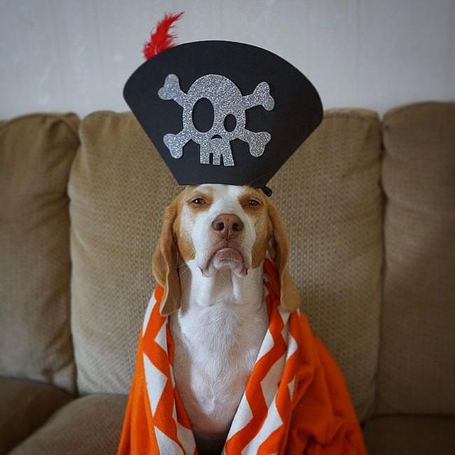 Đến fashionista cũng phải ngả mũ vì style thời trang của chú chó này - Ảnh 6.