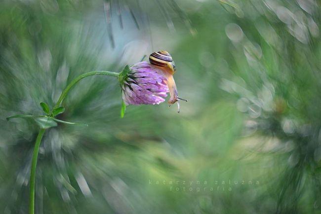 Bộ ảnh đẹp lung linh về ốc sên quấn quít bên hoa trong sương sớm - Ảnh 6.