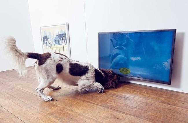 Ghé thăm triển lãm nghệ thuật dành cho chó đầu tiên trên thế giới - Ảnh 7.