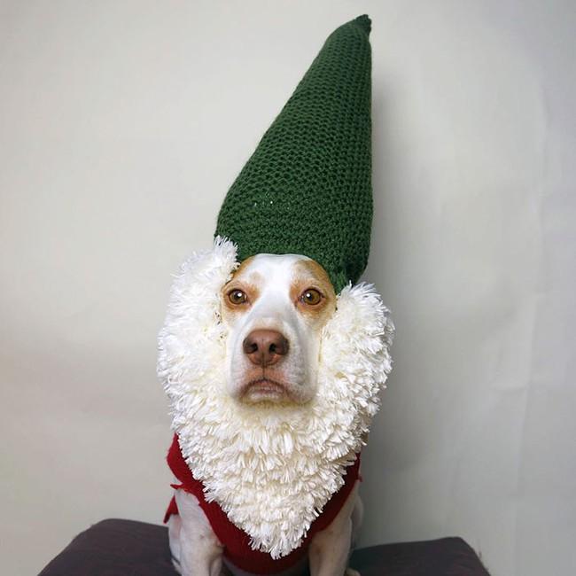 Đến fashionista cũng phải ngả mũ vì style thời trang của chú chó này - Ảnh 7.
