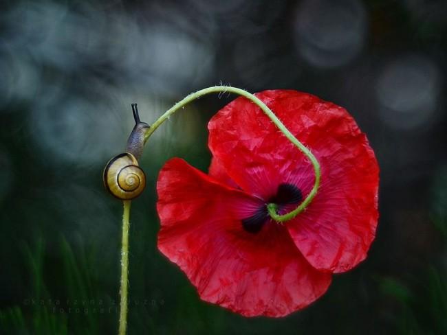 Bộ ảnh đẹp lung linh về ốc sên quấn quít bên hoa trong sương sớm - Ảnh 7.