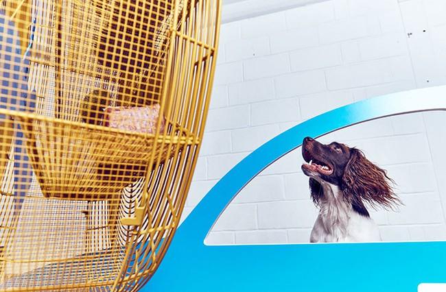 Ghé thăm triển lãm nghệ thuật dành cho chó đầu tiên trên thế giới - Ảnh 8.