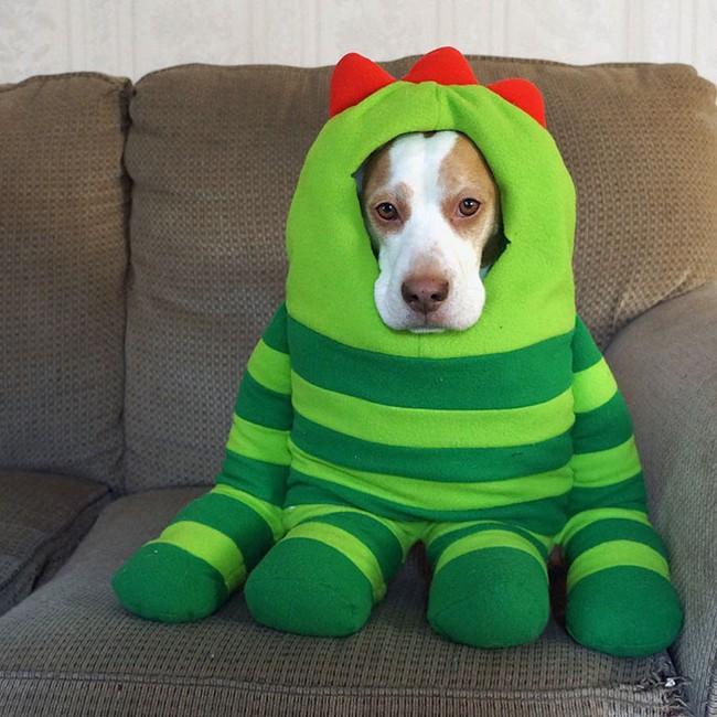 Đến fashionista cũng phải ngả mũ vì style thời trang của chú chó này - Ảnh 8.